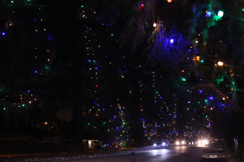 Christmas Tree Lane, Altadena - huge deodar cedars with Christmas lights on at night with cars driving by